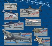 shark-postergrnew2_web