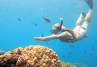 stock-footage-young-woman-dives-to-explore-the-beautiful-coral-reef-in-clear-blue-water
