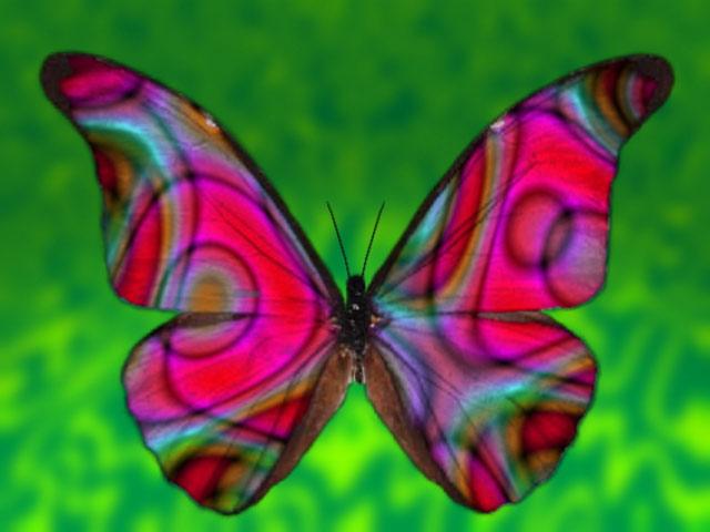 10_butterfly2