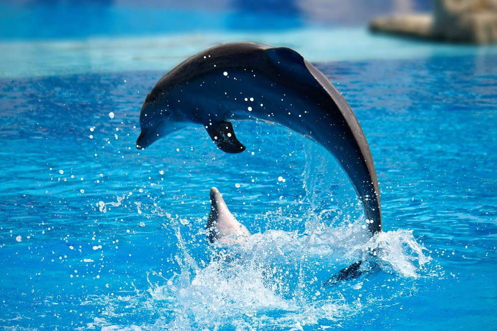 1280px-Dolphin_show_in_Lisbon_Zoo_03