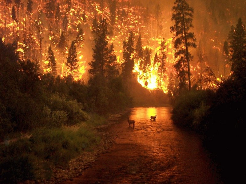 forest-on-fire