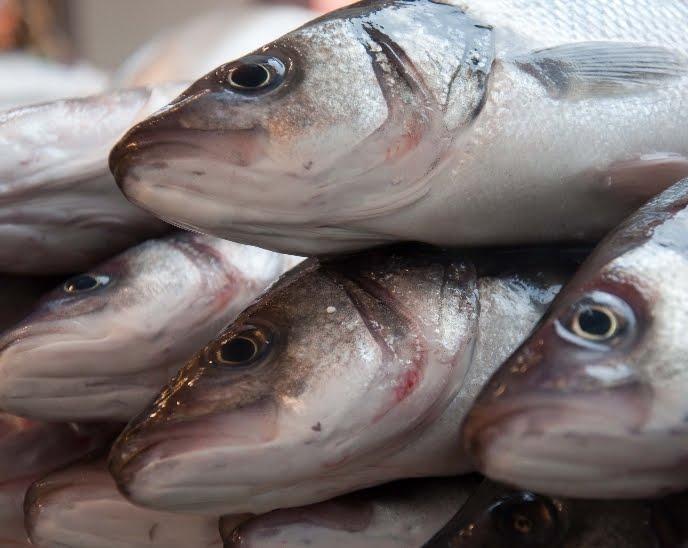 fresh fish albans