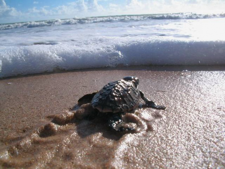 hatchling with waves 1