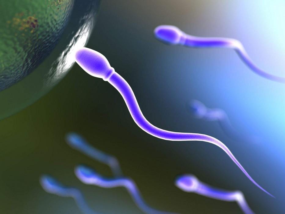 masculine men sperm fertilization