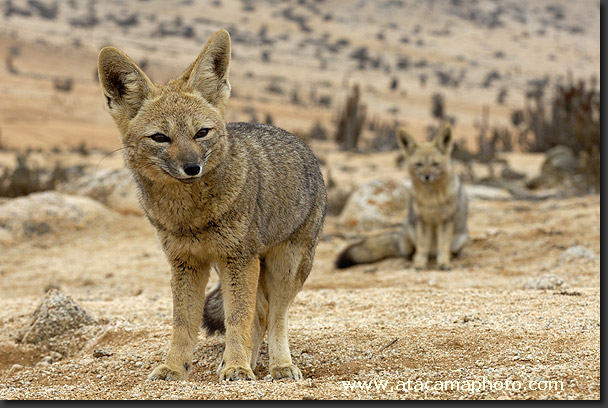 desert-animals7