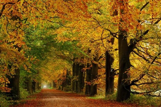 October-Splendour-Again-by-jchanders-1024x684