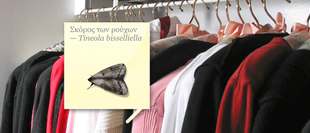 banner_polilla_de_la_ropa_170610_1276791731_63_