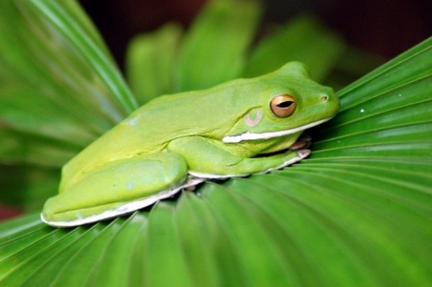 frog.0