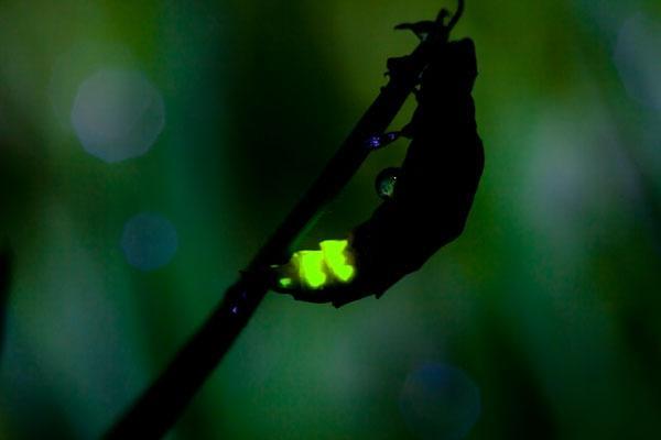 glow_worm_Dave_Kilbey@large