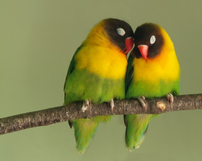 ws_Love_Birds_1280x1024