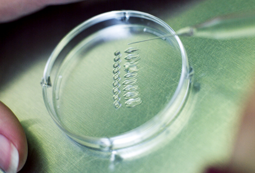 embryologist_525