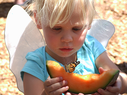 Best-Bets-Kid-Melon-Butterfly-for-web