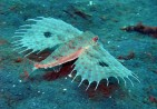 strange-but-real-deep-sea-life-31013376-800-600