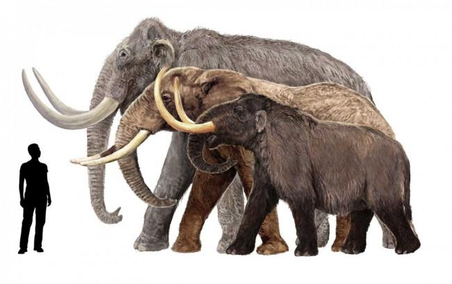 Mammoths_Man-1200x756
