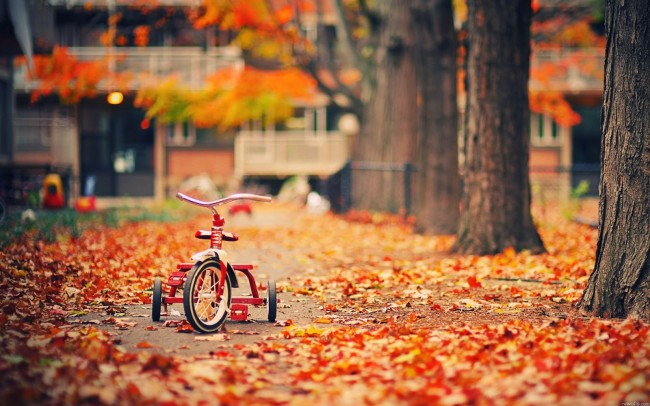 Wallpapers-Fall-biking-trees-leaves