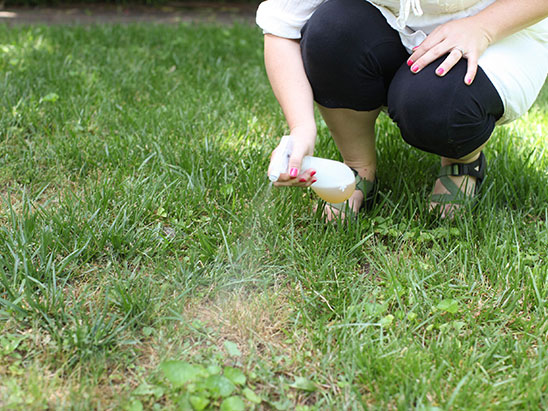beer-grass