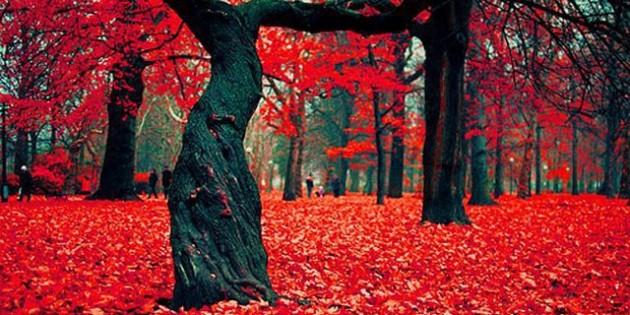 Crimson Forest, Gryfino Πολωνία