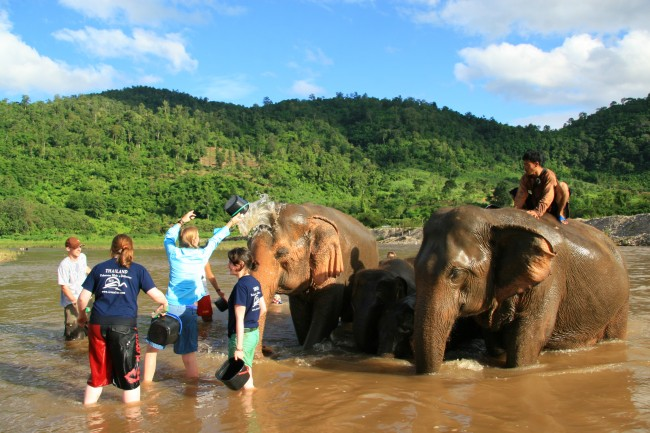 Mud-and-Elephants