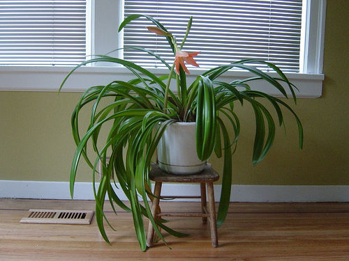 indoorplants_zpsa7248f0f