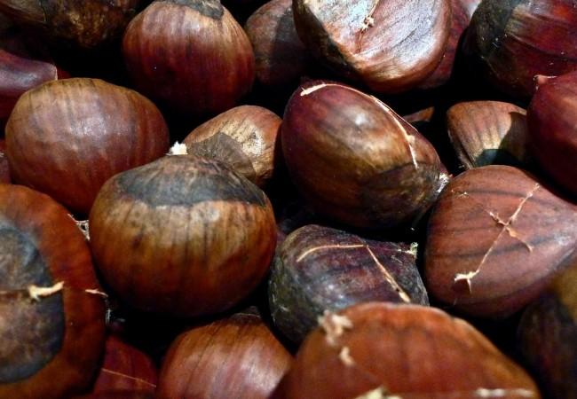 x chestnut
