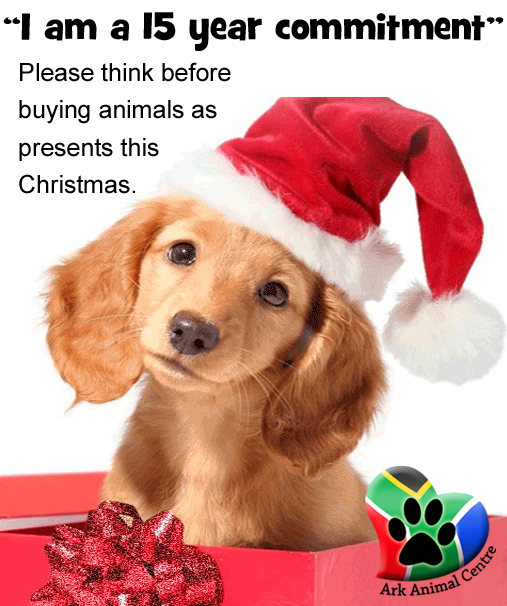 dont-buy-animals-puppies-as-presents-this-christmas-festive-season-ark-animal-centre-plea