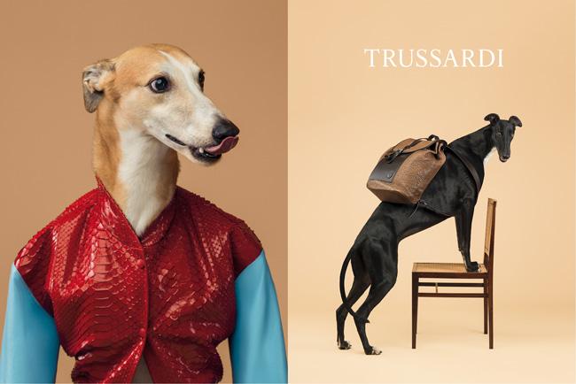 1-trussardi-william-wegman-dogs-perros-greyhounds-galgos