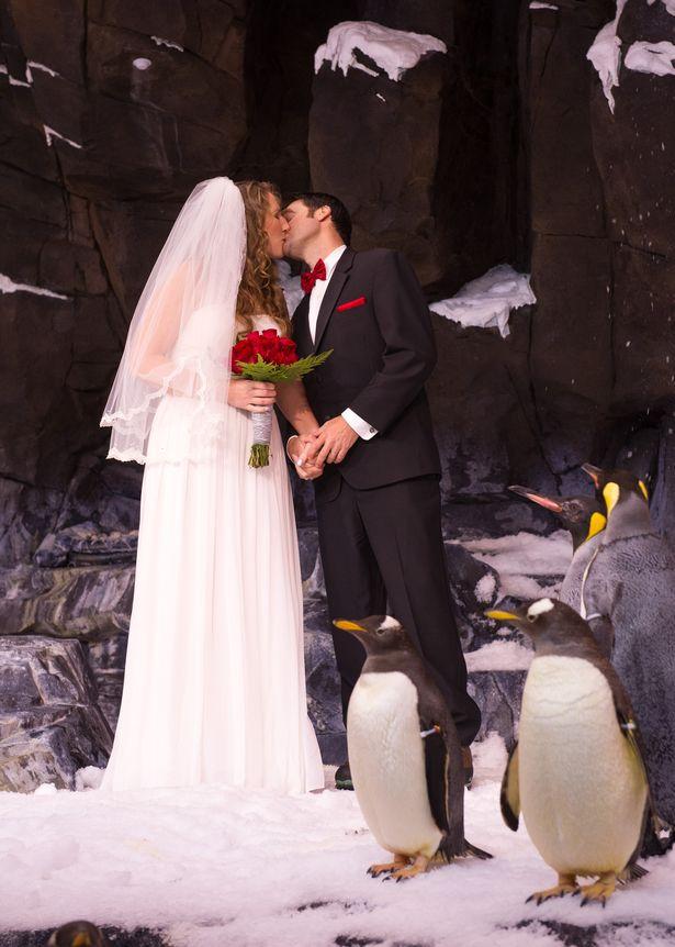20140110_Antarctica_Wedding_23