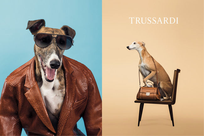 3-trussardi-william-wegman-dogs-perros-greyhounds-galgos
