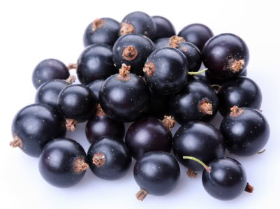 Currant black; Objects on white background