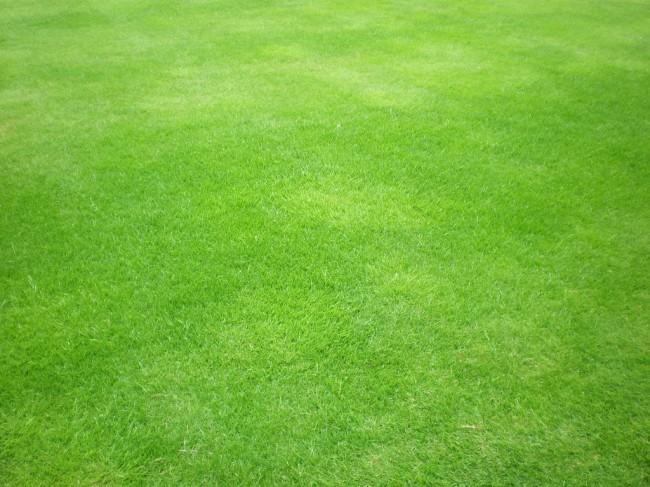 Green_grass_by_Gardek