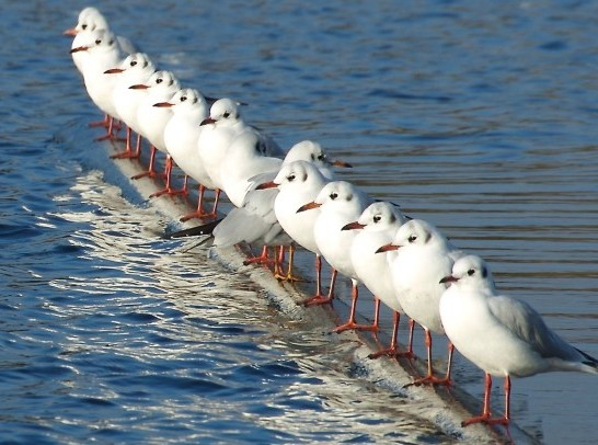 Line-Of-Seagulls