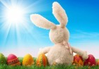 CuteEasterRabbit3_2014_freecomputerdesktopwallpaper_1680