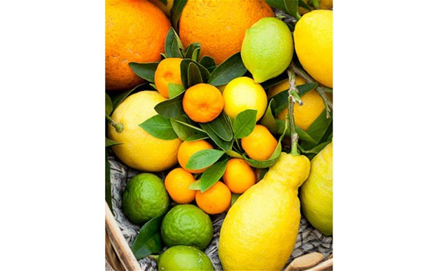 citrusmain_2180433b