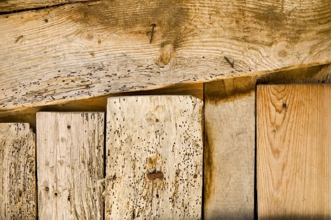 Woodworm-Holes-1024x682