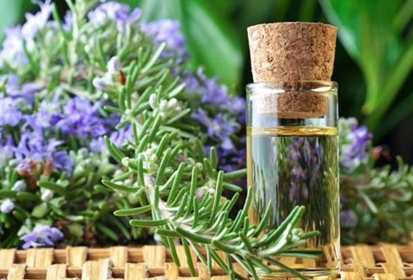 benefits-of-rosemary-oil-for-skin