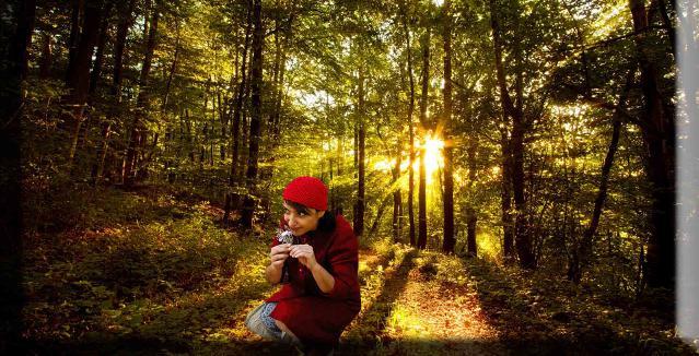 Περπατώ εις το δάσος~471894-253-1(1)