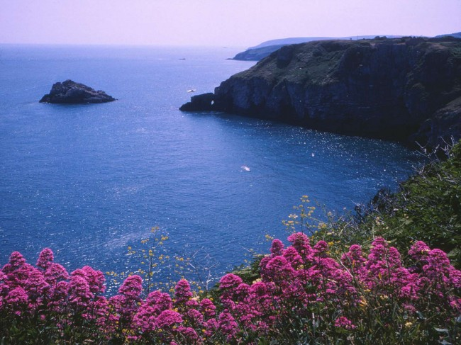 sls0696_sea_view_purple_flowers_and_island