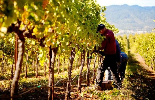 rodney-strong-vineyards-02_970_528_60_s_c1