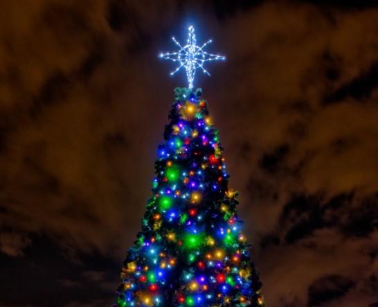 Curtis-Hixon-Park-Christmas-Tree1