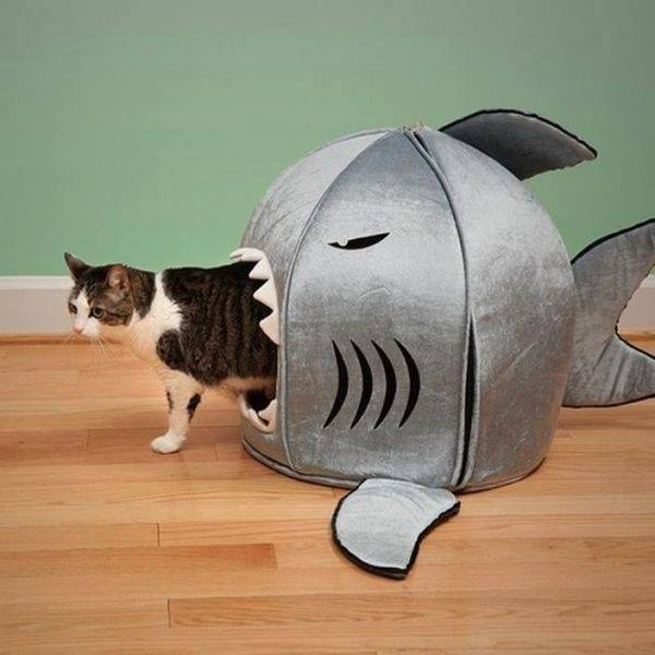 b0bee1ff7f8e Παιχνίδια για γάτες! Το αγαπημένο μας κατοικίδιο θέλει τα δικά του ...