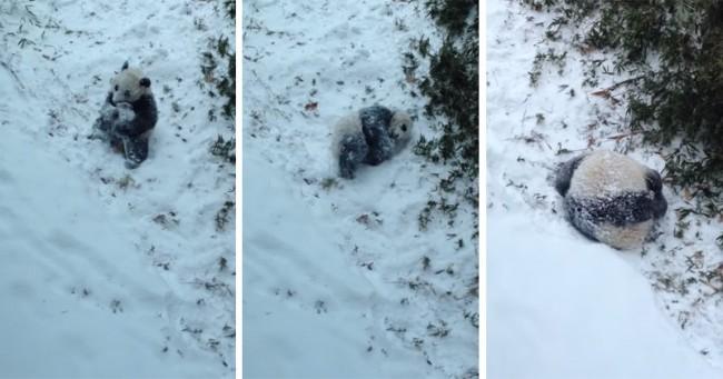 bao-bao-the-pandas-first-snow-day