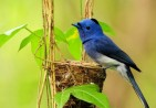 blue-bird-nest-1280x800