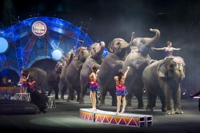 circus-elephants