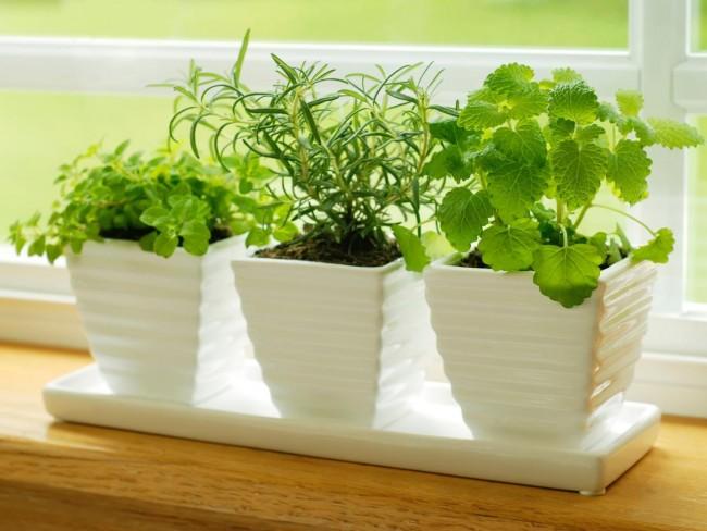 iStock-4787386_herbs-on-kitchen-windowsill_s4x3.jpg.rend.hgtvcom.1280.960