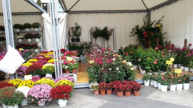 Κοσμεί μωσαϊκό με άνθη και φυτά