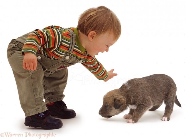 00578-Toddler-with-little-puppy-white-background