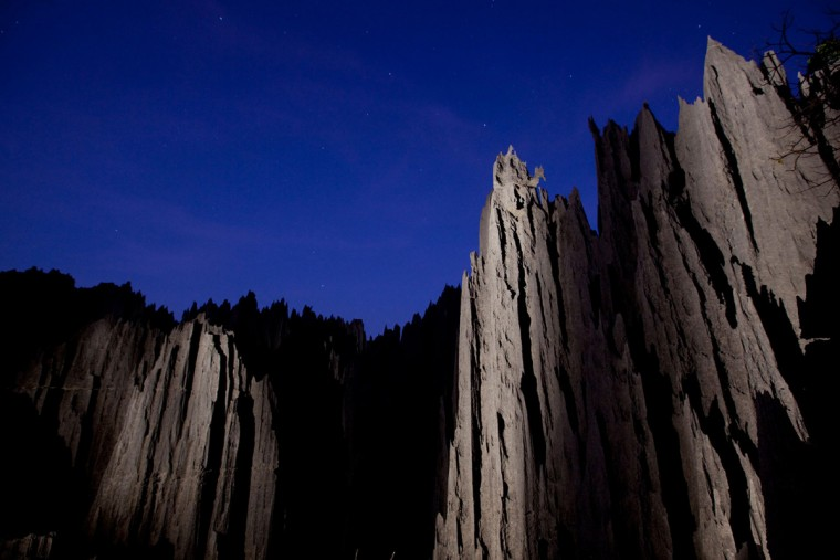 Stone-Forest-of-Madagascar_5