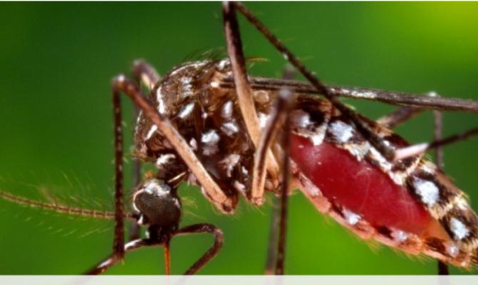 zika-virus-670x400