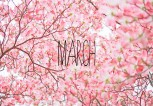 march_011
