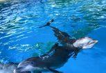 Δελφίνια Αττικό Ζωολογικό Πάρκο